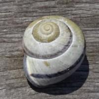 Profilbild von Nova